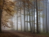 Foggy Wood 2
