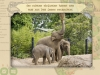 <!--:de-->04 Dublin Zoo<!--:--><!--:en-->04 Dublin zoo<!--:-->