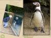 <!--:de-->05 Dublin Zoo<!--:--><!--:en-->05 Dublin zoo<!--:-->