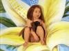 Gelber Blumensitz