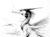 <!--:de-->Kormorandrache s/w<!--:--><!--:en-->Kormoran drake b/w<!--:-->